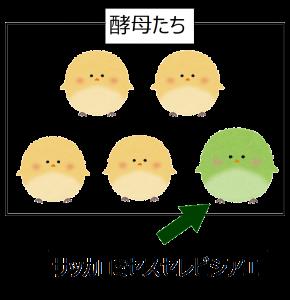 酵母の説明